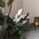 Pflanzen und Licht