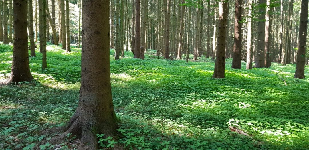 Gehmeditation im Wald